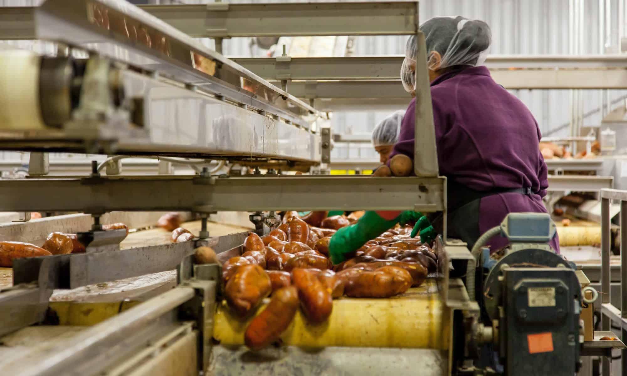 Pracownicy Fabryki Spożywczej